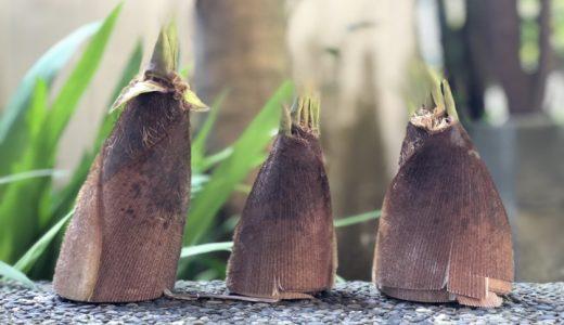 たけのこ雑学|たけのこは根菜?「筍」と「竹の子」の違いは?どんなことわざがある?