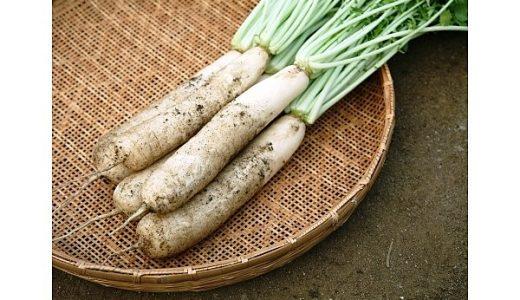 山田ねずみ大根(辛味大根)の特徴・旬の時期は?滋賀県の伝統品種