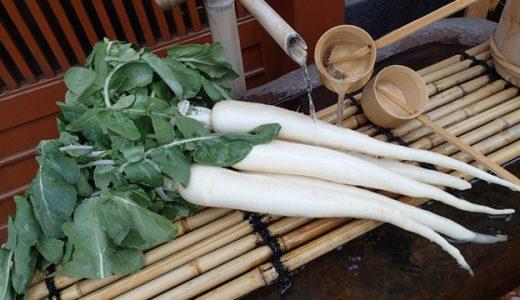 亀戸大根の特徴・旬の時期は?東京都の伝統品種