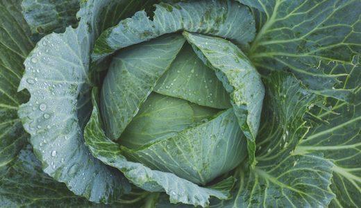 金瑛の特徴・旬の時期まとめ|濃緑で糖度の高い春系キャベツ
