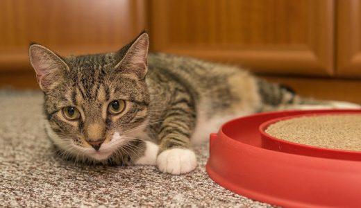 キャベツを猫に食べさせても大丈夫?アレルギー症状と与える時の注意点まとめ