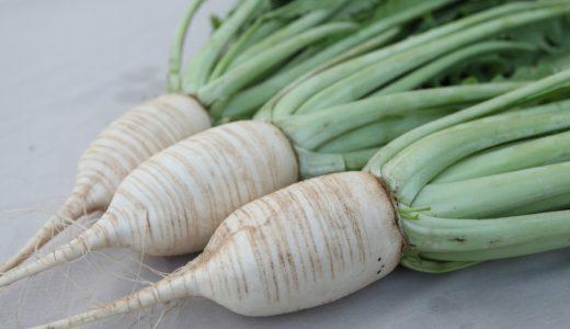 松館しぼり大根の特徴・旬の時期は?秋田県の伝統品種