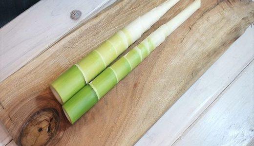 麻竹の特徴・旬の時期まとめ|メンマに加工される中国南部のたけのこ