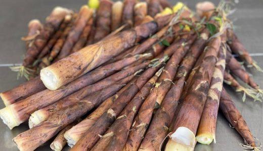 布袋竹の特徴・旬の時期まとめ|歯ごたえのよいアクが少ないたけのこ