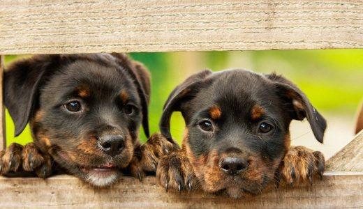 犬にたけのこを食べさせても大丈夫?与える際の注意点とは?