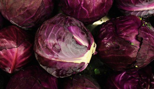 中生ルビーボールの特徴・旬の時期まとめ|濃い赤紫色をした冬どりの紫キャベツ
