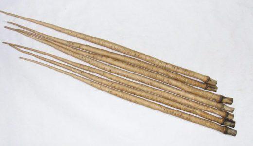 渡辺早生ごぼうの特徴・旬の時期まとめ|早掘り用として作られた長根種ごぼう