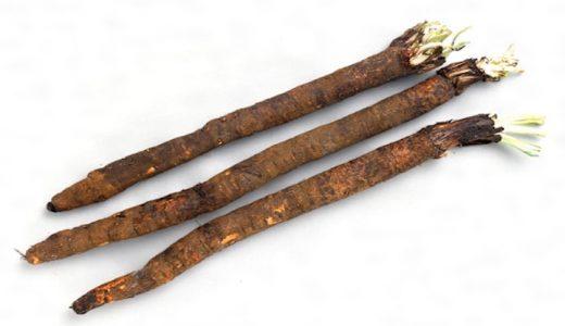 サルシフィ(西洋ごぼう)の特徴・旬の時期まとめ|フランス料理に使われる西洋の根野菜
