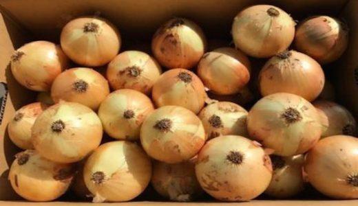 ターザンの特徴・旬の時期まとめ|「玉ねぎの王様」と呼ばれる黄玉ねぎ