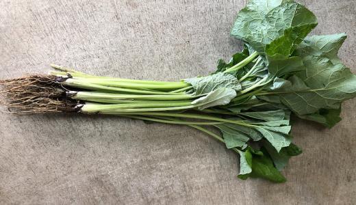 越前白茎ごぼうの特徴・旬の時期まとめ|葉も食べられるごぼうの代表的品種