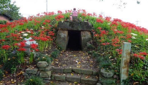 多胡薬師塚古墳の墳丘の上にはたくさんの彼岸花!解説とアクセス・周辺おすすめランチまとめ
