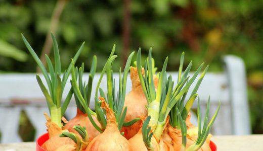玉ねぎの主な栄養成分と期待できる効果・効能