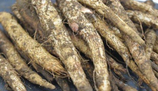 菊ごぼう(山ごぼう)の特徴・旬の時期まとめ|岐阜県で栽培される山菜の一種