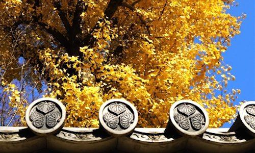 格式高い高貴な家紋とは?天皇家の十六葉菊・徳川葵・秀吉の桐紋・宮家の家紋を解説!