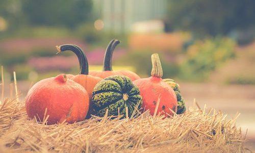 かぼちゃの栄養ってどんなの?さつまいもと栄養はどのくらい違う?妊婦・離乳食でも大丈夫?