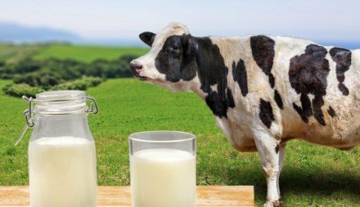 【2020年】牛乳の生産量ランキング!日本ではどの県が多い?