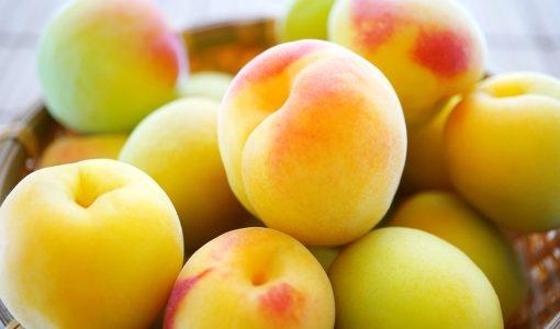 梅が腐るとどうなる?黄色・赤・茶色く変色|常温・冷蔵・冷凍保存方法と期限は?