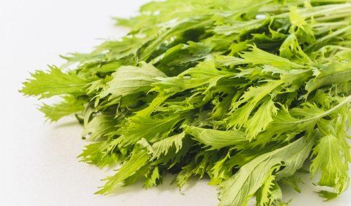水菜(みずな)が腐るとどうなる?黄色く変色・しなしな|冷蔵・冷凍保存方法と賞味期限は?