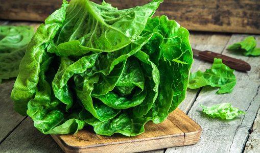 サラダ菜の保存方法と保存期限 腐るとどうなる?変色・乾燥・しなしな・黄色っぽい