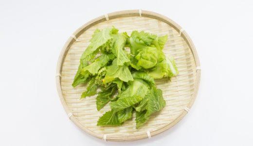 高菜の下処理方法 洗い方・切り方・あく抜き!漬物の塩抜き方法もご紹介