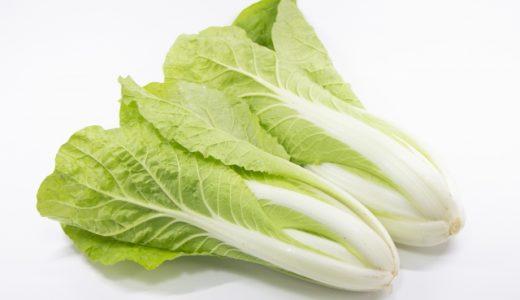 タイニーシュシュの特徴・旬の時期まとめ|生でも美味しく食べられる結球タイプの白菜