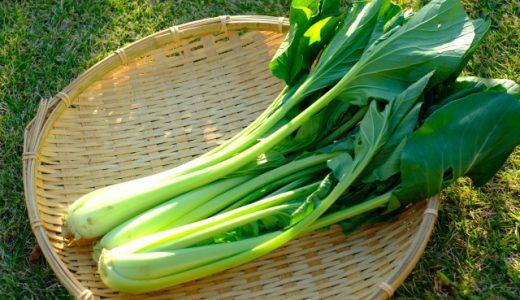 小松菜の味が苦い4つの原因|苦味を消す対処法・食べ方をご紹介