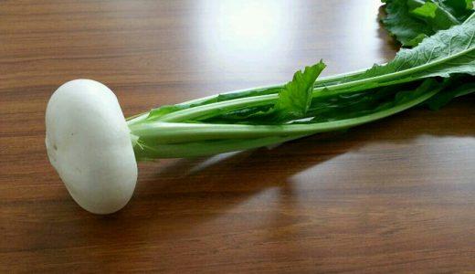 寄居カブの特徴・旬の時期まとめ 新潟県の伝統野菜のひとつである丸いカブ