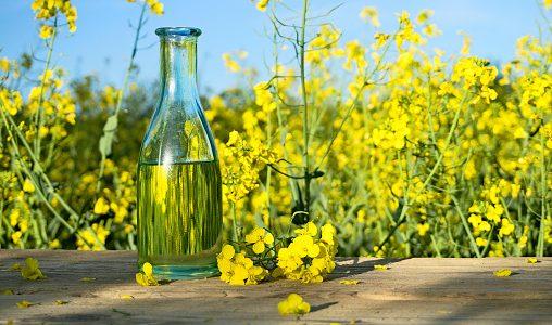 菜種油って腐るの?期限切れ・酸化・劣化|開封後の保存方法と賞味期限・見分け方は?