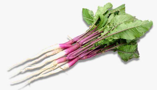 日野菜(カブ)の特徴・旬の時期まとめ|独特の辛味と苦味が特徴!滋賀県の伝統野菜の色付きカブ