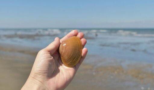バカ貝が腐るとどうなる?開かない・半開き・生臭い|保存方法と賞味期限・見分け方