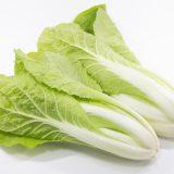 プチヒリの特徴・旬の時期まとめ|小さくてスリムな形をした結球タイプの白菜