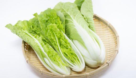 たけのこ白菜の特徴・旬の時期まとめ|スリムの形をした結球タイプの白菜