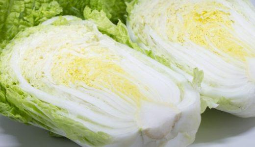 野崎白菜(愛知白菜)の特徴・旬の時期まとめ|幻の白菜とも呼ばれる結球タイプの白菜