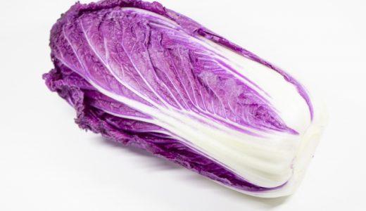 パープル白菜(紫奏子)の特徴・旬の時期まとめ|アントシアニンを含んだ結球タイプのサラダ用白菜