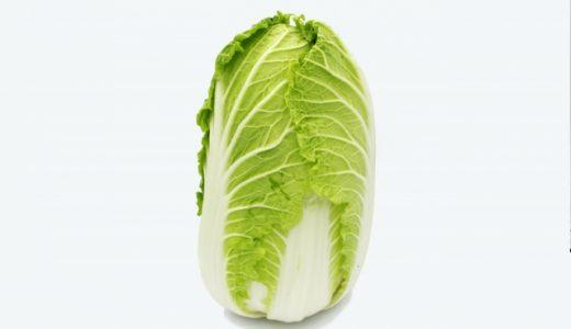 仙台白菜(松島白菜)の特徴・旬の時期まとめ|宮城県伝統野菜のひとつである結球タイプの白菜