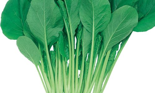 はまつづきの特徴・旬の時期まとめ 春先も美味しく食べられる主流品種の小松菜