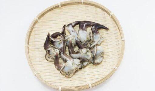 トリガイが腐るとどうなる?開かない・半開き・生臭い|保存方法と賞味期限・見分け方
