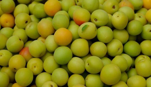 食用梅の種類・品種をまとめて解説