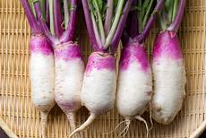 北之庄菜の特徴・旬の時期まとめ 近江八幡の伝統野菜!適度な甘味と辛味のある紫と白の色付きカブ