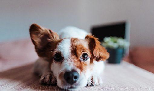 【アレルギー】犬に小松菜を与えても大丈夫?メリットや注意点とは