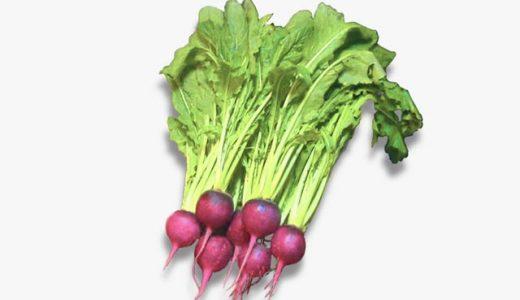 王滝カブの特徴・旬の時期まとめ 信州伝統野菜!王滝村で育てられる赤い色付きカブ