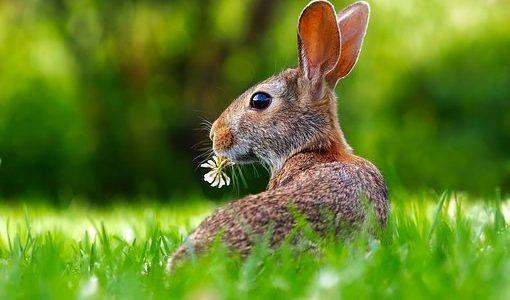 【アレルギー】うさぎは小松菜を食べても大丈夫?メリットや注意点とは