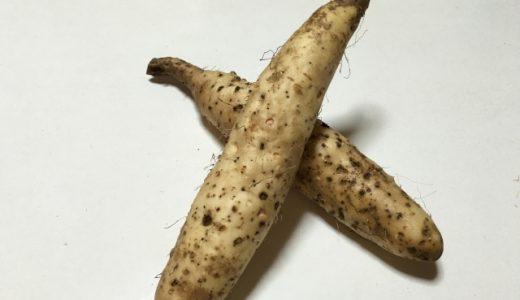 山芋の部位を画像付きで紹介!普段見ることの少ない山芋の花言葉もご紹介
