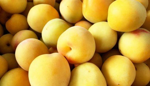 南高梅の特徴・旬の時期まとめ|加工にも使いやすい中粒の梅
