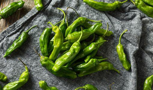 ししとうのおススメレシピ10選|人気料理・美味しい食べ方は何?