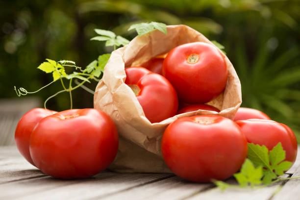 毎日 トマト