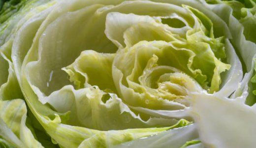 カットレタス・ちぎったレタスの日持ち|長持ち保存方法・冷凍できる?