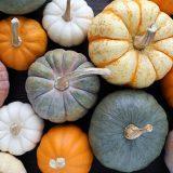 かぼちゃの冷凍保存期間 長持ち・ホクホク保存方法 スカスカになる?