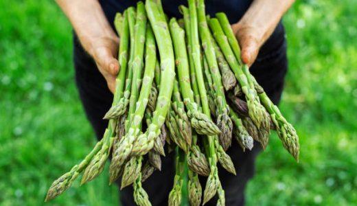 妊娠中(妊婦)でもアスパラガスは食べられる!葉酸豊富◎栄養・効果は?